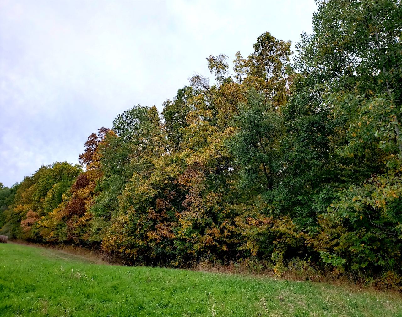 Leaves beginning to change in Branchport (photo)